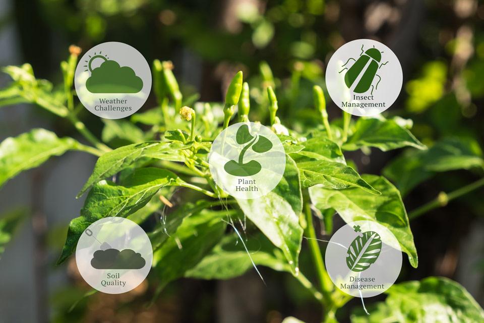 smart-farming image